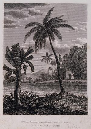 view A man climbing a coconut palm (Cocos nucifera L.) which stands by a banana plant (Musa sp.), in a waterside setting in Bombay, India. Engraving by J. Shury after J. Forbes, 1768.