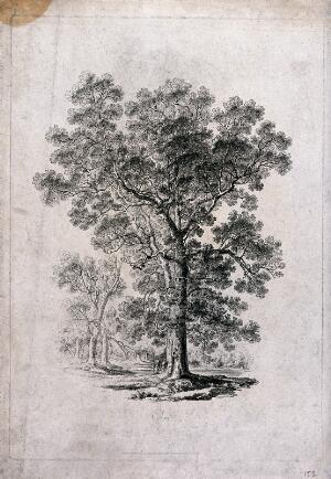view Elm tree (Ulmus species) in parkland with people at its base. Etching, c. 1817, after J. Martin.