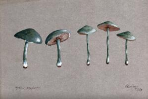 view A fungus (Stropharia aeruginosa): five fruiting bodies. Watercolour, 1883.