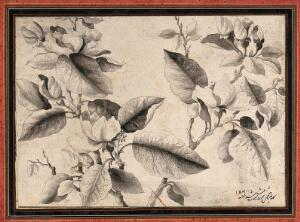 view A flowering stem, possibly of a peach tree (Prunus species). Ink drawing, c.1789.