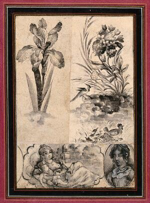view An iris; flowers and birds; two ladies, one with a baby. Ink drawings.