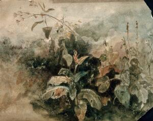 view A stand of wild plants. Watercolour.