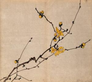 view A flowering shrub: branch with yellow flowers on old wood. Watercolour.