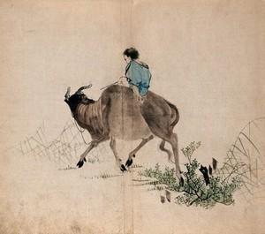 view A man riding an oxen through grass and shrub land. Watercolour.