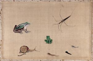 view Seven animals from Japan, including two frogs, a snail, a slug, a water-bug and a silver fish. Gouache painting.