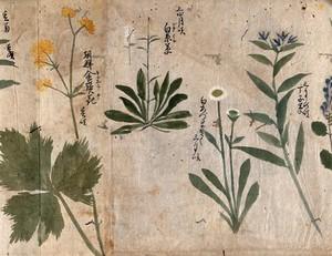 view Four flowering plants. Watercolour, c. 1870.