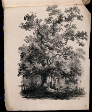 view An old oak tree (Quercus robur) with surrounding vegetation. Lithograph, c. 1822.