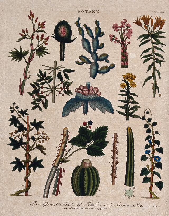 Fourteen different forms of plant stem. Coloured etching by J. Pass, c. 1799.