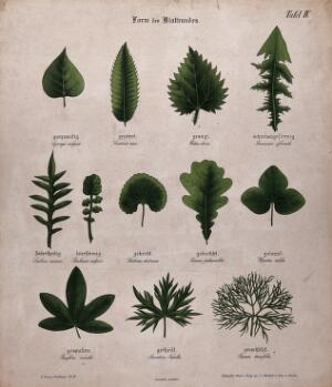 view Twelve plant leaves with different types of margin. Chromolithograph, c. 1850.