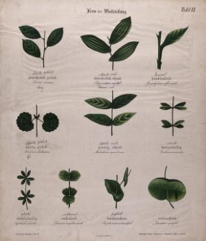 view Ten plant leaves, all with different arrangements. Chromolithograph, c. 1850.