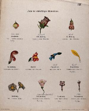 view Eleven single flowers, all with a different shape or form. Chromolithograph, c. 1850.
