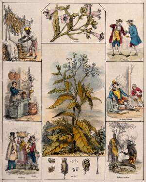 view A tobacco plant (Nicotiana tabacum), its flowers and seeds, bordered by six scenes illustrating its use by man. Coloured lithograph, c. 1840.