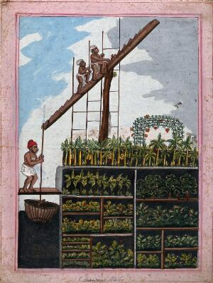 view Indian agriculture: drawing water for crops. Gouache drawing.