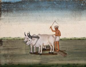 view A man raises a stick as the oxen plough the land. Watercolour by an Indian artist.