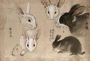 view Rabbits. Gouache, 18--.