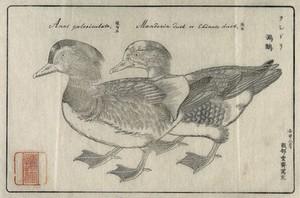 view Japan: a pair of mandarin ducks. Woodcut after Sessai, 1872.