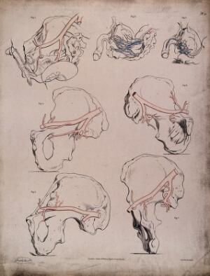 view The circulatory system: dissections of the male reproductive system and pelvic bone, with the arteries and veins indicated in red and blue. Coloured lithograph by J. Maclise, 1841/1844.