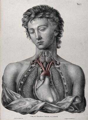 view Partial dissection of the chest of a man, with arteries indicated in red. Coloured lithograph by J. Roux, 1822.