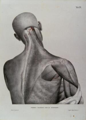 view Head, shoulder and back of an écorché figure, seen from behind, with the arteries and blood vessels indicated in red. Coloured lithograph by J. Roux, 1822.