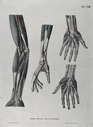 view Dissections of the arm and hand; four figures, with the arteries and blood vessels indicated in red. Coloured lithograph by J. Roux, 1822.