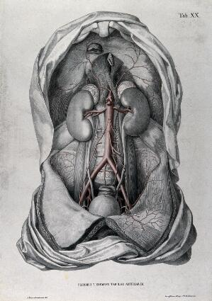 view Dissection of the abdomen of a man, with the arteries and blood vessels indicated in red. Coloured lithograph by J. Roux, 1822.