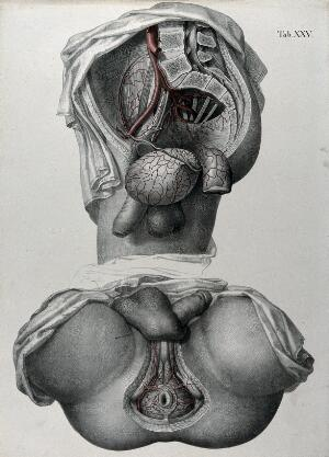 view Dissections of the male anus and urogenital system: two figures, with the arteries and blood vessels indicated in red. Coloured lithograph by J. Roux, 1822.