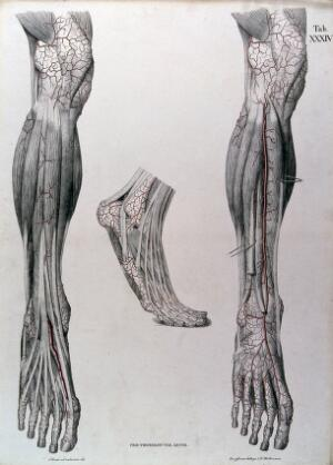 view Dissections of the lower leg and the foot, front view: three figures, with the arteries and blood vessels indicated in red. Coloured lithograph by J. Roux, 1822.