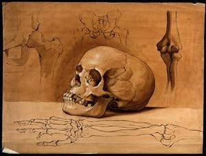view Skull, pelvic bones and bones of the arm. Drawing, ca. 1800.