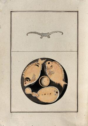 view Red-figured Greek plate decorated with three fish. Watercolour by A. Dahlstein, 1760/1780 (?).