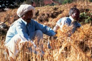 view Agriculture: harvesting wheat
