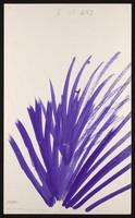 view A purple eruption. Watercolour by M. Bishop, 1971.