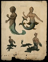 view Three mermaids, one of them showing posterior and front view. Coloured engraving, 1817.