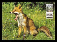 view Stop illegal poisoning of our wildlife : Fox, Vulpes vulpes / Dept. of the Environment ; photo: Nature Photographers Ltd.