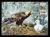 view Stop illegal poisoning of our wildlife : Golden eagle, aquila chrysaetos /  Dept. of the Environment ; photo: Nature Photographers Ltd.