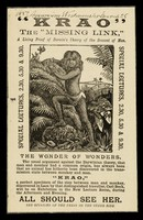 """view """"Krao"""", the """"missing link"""" : a living proof of Darwin's theory of the descent of man : special lectures, 2.30, 5.30 & 9.30... : all should see her : [jungle illustration]."""