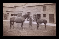 view Measurement of Racehorses and Other Pedigree Stock
