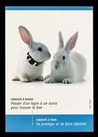 view Conduite à risque : passer d'un lapin à un autre pour trouver le bon : conduite à tenir : se protéger et se faire dépister / ENIPSE.