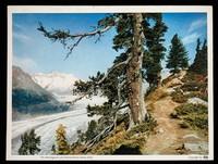 view Butazolidin an effective antirheumatic : the Aletschglacier and Fiescherhöner (Swiss Alps).