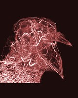 view Microvasculature of a pigeon head.